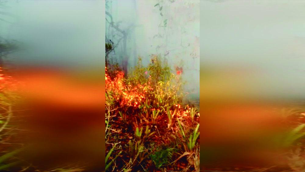 Restinga em Rio das Ostras é destruída após incêndio