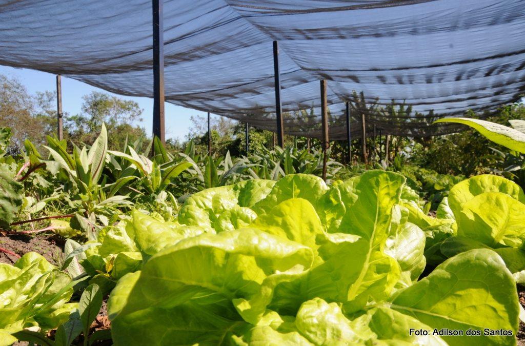 Alimentação Saudável terá  dia especial nesta segunda-feira (16)  em Quissamã