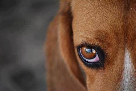 Casos de maus tratos aos animais são avaliados em Tamoios, distrito de Cabo Frio